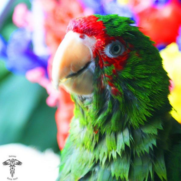 Parrot has a birdbath